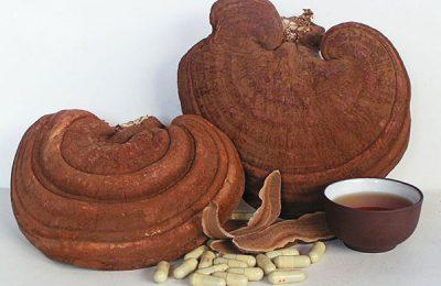 Các sản phẩm từ nấm linh chi Hàn Quốc tốt nhất hiện nay
